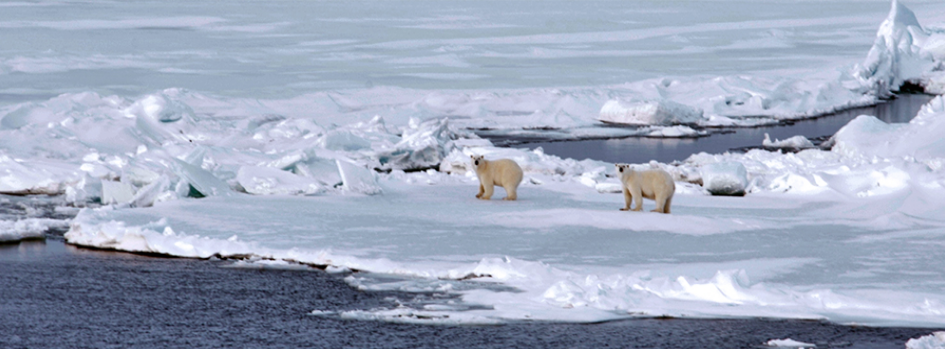ARCPATH – Arctic Climate Predictions: Pathways to Resilient, Sustainable Societies